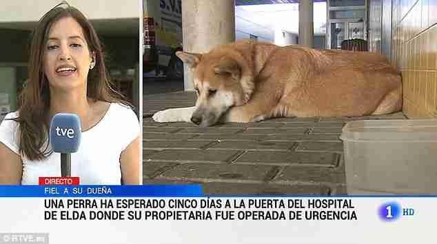 Σκυλίτσα παρέμεινε 6 μέρες έξω από το νοσοκομείο όπου νοσηλευόταν η ιδιοκτήτρια της περιμένοντας την να επιστρέψει