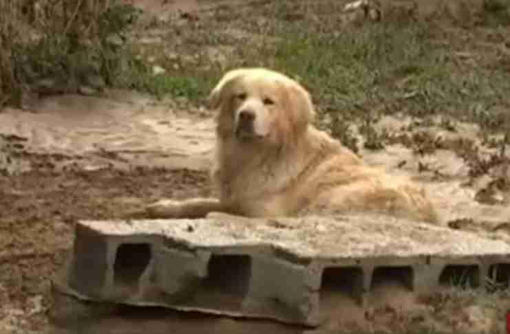 O σκύλος που γλύτωσε από τις πλημμύρες στη Λακωνία και κάθονταν δίπλα στο νεκρό αφεντικό του