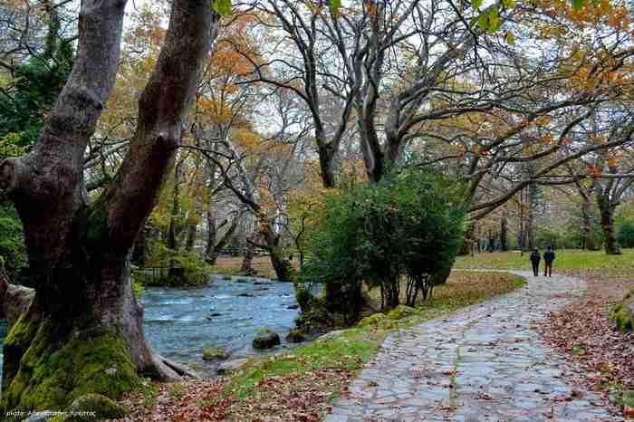 Στην Ελλάδα το παραδεισένιο άλσος με τα υπεραιωνόβια πλατάνια που κέρδισε το πρώτο πανευρωπαϊκό βραβείο. Μαγεύει με την ομορφιά του