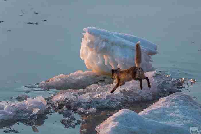 26 υπέροχες φωτογραφίες από το μεγαλύτερο διαγωνισμό φωτογραφίας στη Ρωσία!