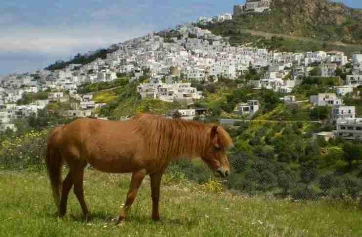 Αλογάκια της Σκύρου: Η αρχαία φυλή των αλόγων του Αχιλλέα και του Αλέξανδρου