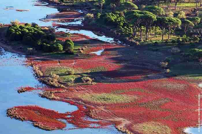 Δεν είναι ο Αμαζόνιος.. Είναι η πιο εξωτική γωνιά της Ελλάδας! Το μεγαλύτερο παραθαλάσσιο δάσος της χώρας!