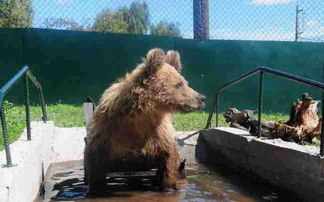 """Το πρώτο αρκουδάκι στον κόσμο που περπατάει με αμαξίδιο χάρη στον """"Αρκτούρο"""" ζητάει κάτι από τον Άγιο Βασίλη"""