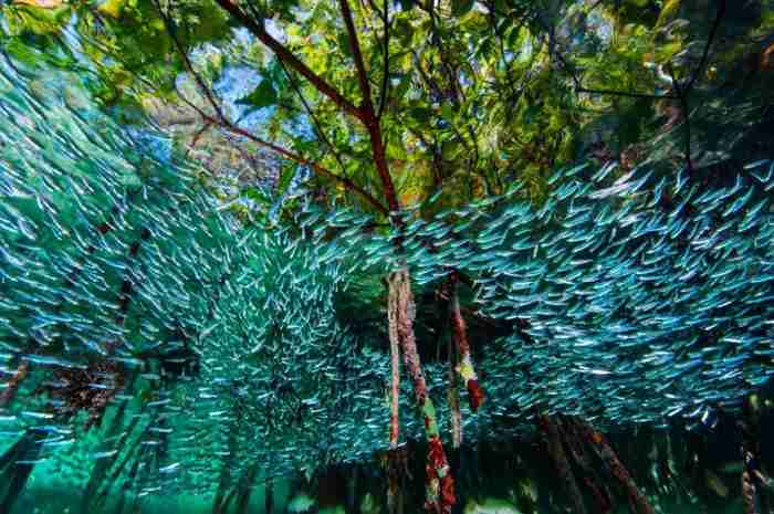 Οι καλύτερες φωτογραφίες του National Geographic για το 2016 σε μεταφέρουν σε μέρη που δεν έχεις δει ποτέ ξανά!