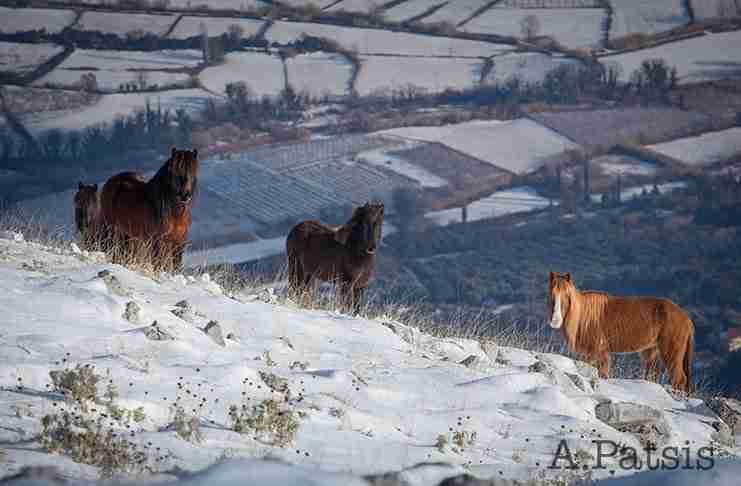 Άγρια άλογα στις χιονισμένες βουνοκορφές της Ελλάδας. Ένα υπέροχο βίντεο!