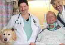 Σκύλος κράτησε ζωντανό μέσα στο χιονιά το τραυματισμένο αφεντικό του για 20 ώρες