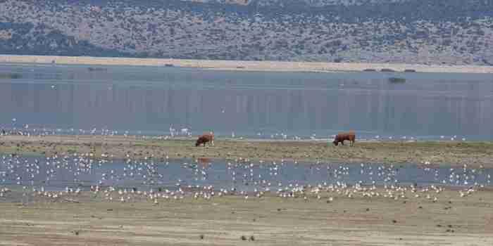 Πριν από 35 χρόνια αποφάσισαν να την εξαφανίσουν. Σήμερα αυτή η αρχαία λίμνη είναι ένας από τους μυστικούς θησαυρούς της χώρας μας!