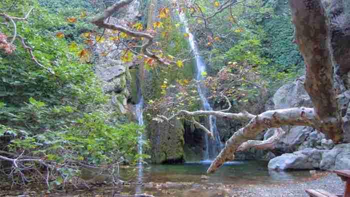 """Η """"τροπική"""" ζούγκλα της Ελλάδας: Αιωνόβια δέντρα που κρύβουν το φως, κληματσίδες, κισσοί, λίμνες και πανέμορφοι καταρράκτες"""