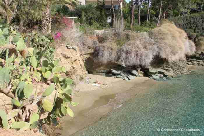 """Στην ωραιότερη """"άγνωστη"""" παραλία της Ελλάδας οι φοίνικες και τα λουλούδια ακουμπούν τη θάλασσα.."""
