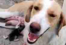 Αδέσποτη σκυλίτσα στη Λαμία θηλάζει γατάκι που κάποιος πέταξε στα σκουπίδια