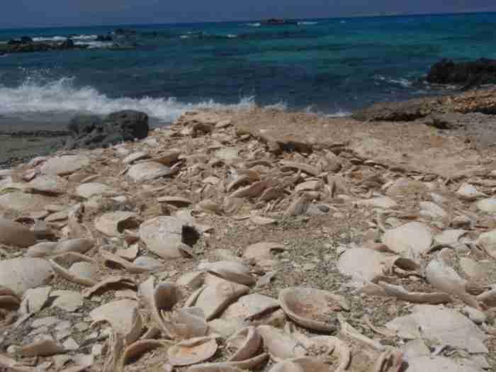 Το διαμάντι του Νότου: Το ακατοίκητο ελληνικό νησάκι με το μεγαλύτερο φυσικό κεδρόδασος της Ευρώπης και τα αμέτρητα κοχύλια