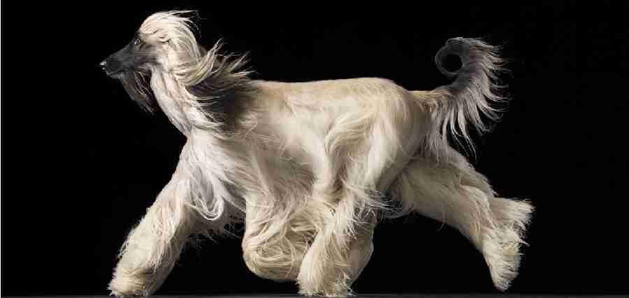 Όμορφα σκυλιά