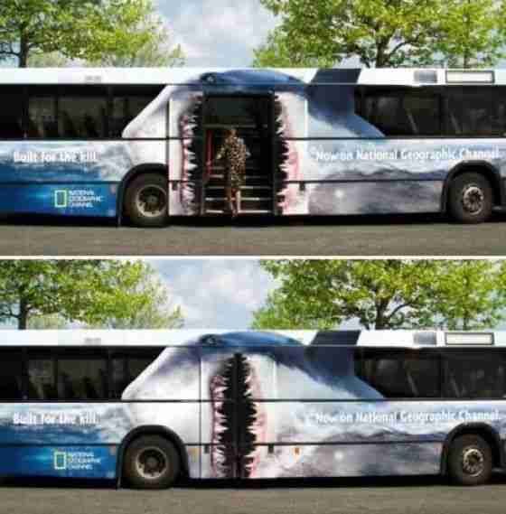 Look Out its the Shark Bus