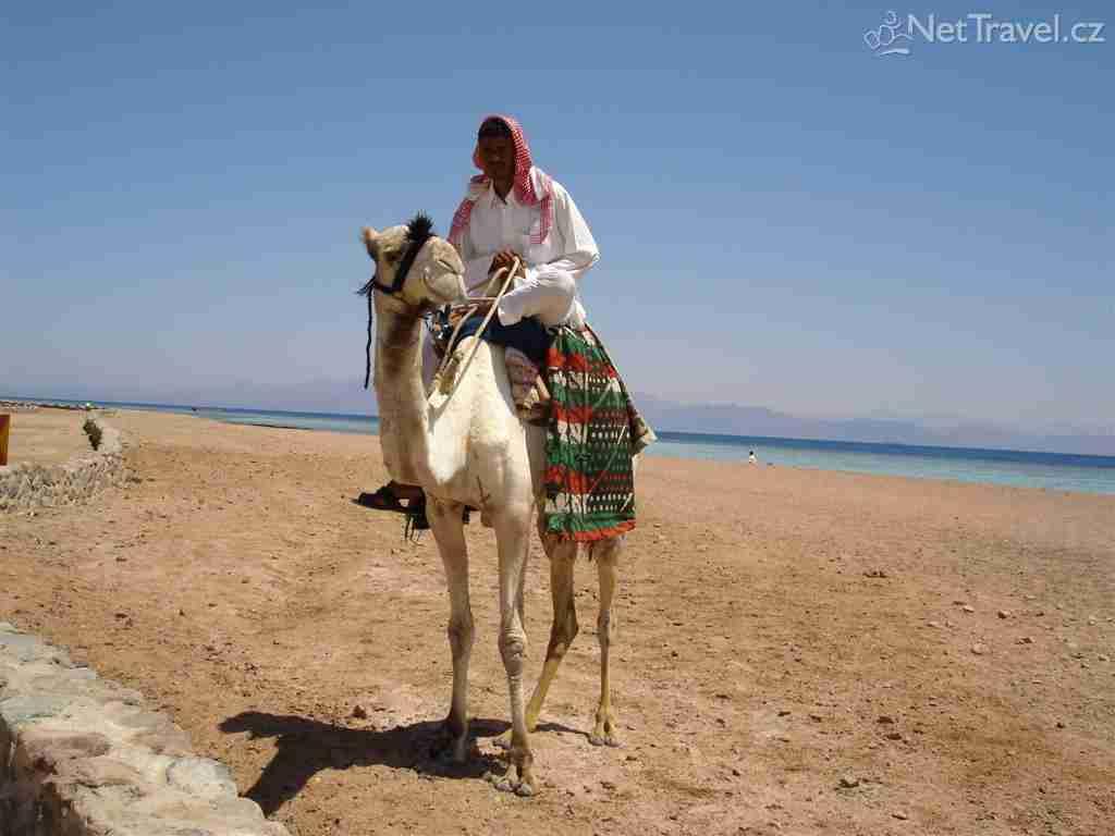 Βεδουϊνοι : Οι Μυστηριώδεις Άνθρωποι της Έρήμου