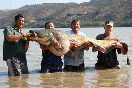 Πιάνοντας το μεγάλο ψάρι