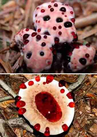 Τα πιο παράξενα μανιτάρια στον κόσμο