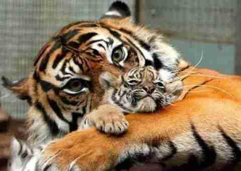Ποιά μάνα είναι η καλύτερη;