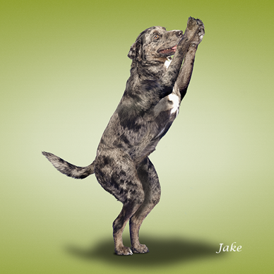 Η yoga των σκύλων