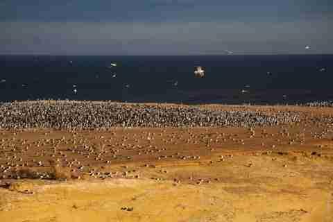 Παταγονία: Ο παράδεισος των πιγκουίνων