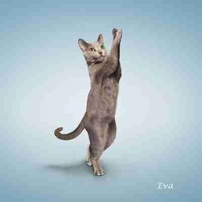 Γάτες που κάνουν γιόγκα..