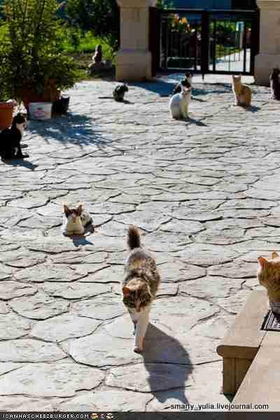 Άγιος Νικόλαος των γάτων