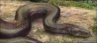 Το μεγαλύτερο φίδι του κόσμου