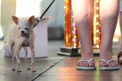 Το ασχημότερο σκυλί στον κόσμο