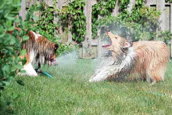 Σκύλοι που λατρεύουν το νερό!