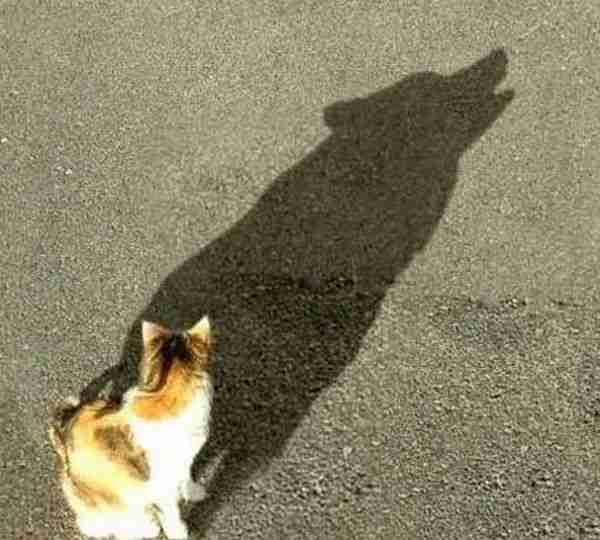 Παιχνίδι με τις σκιές
