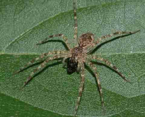 Ξίδι με αράχνη...(μπλιαχ)