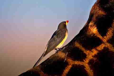 Suha Derbent, ο φωτογράφος της άγριας φύσης
