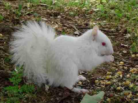 Εντυπωσιακά ζώα Αλμπίνο