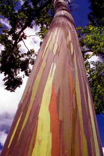 Το πολύχρωμο δέντρο