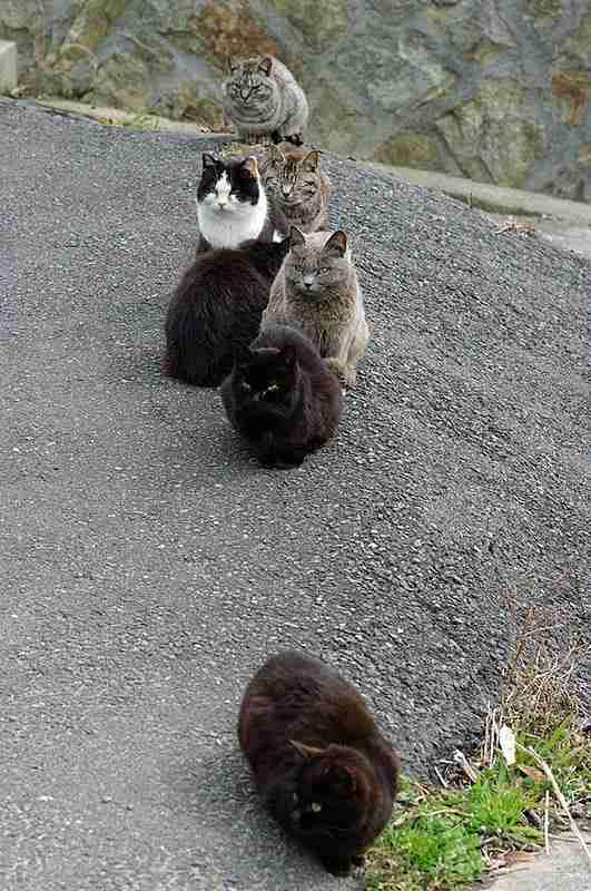 Το Νησί της Γάτας