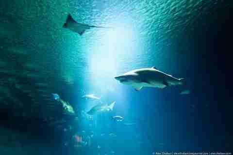 Ο υποβρύχιος κόσμος της Βαλένθια