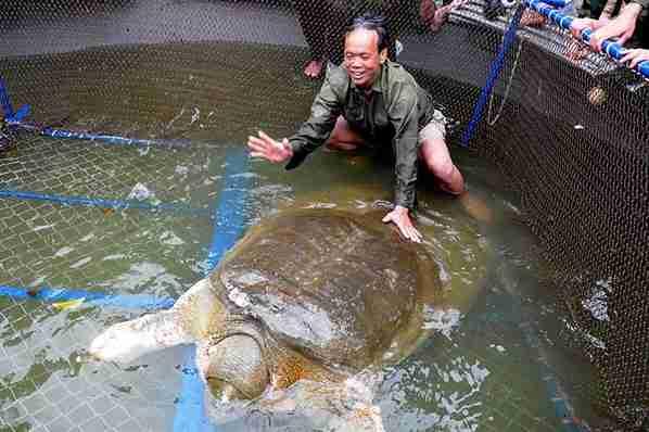 Η χελώνα Hoan Kiem – Βιετνάμ
