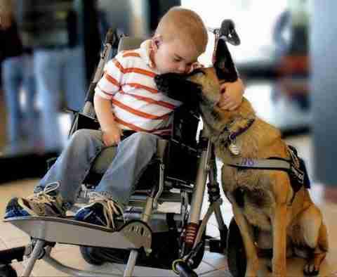 Ο καλύτερος φίλος του ανθρώπου!