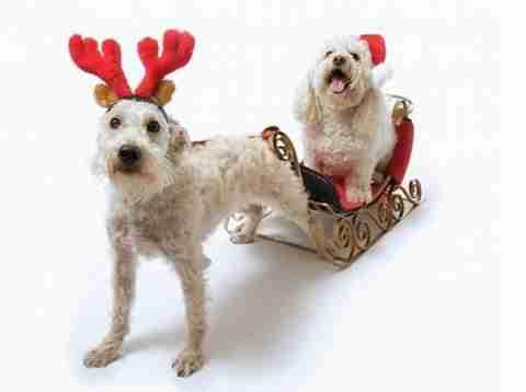 Ζώα που λατρεύουν τα Χριστούγεννα!