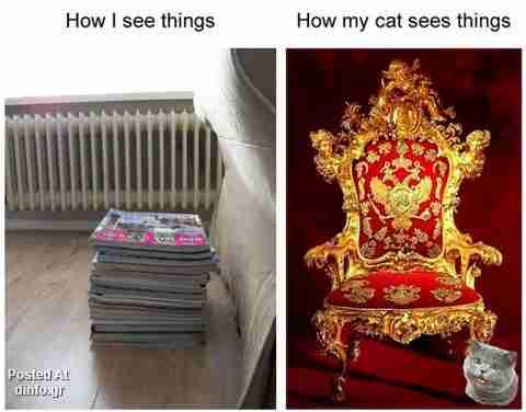 Με τα μάτια μιας γάτας..