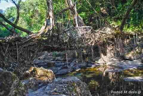 Όταν η φύση κατασκευάζει γέφυρες