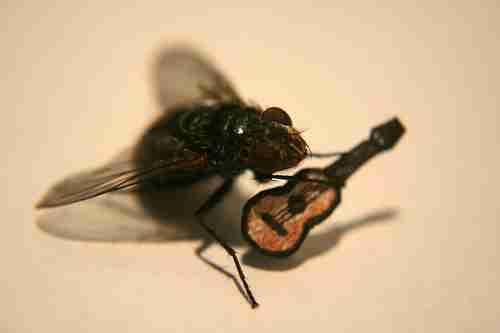 Οι περιπέτειες του Mr. Fly
