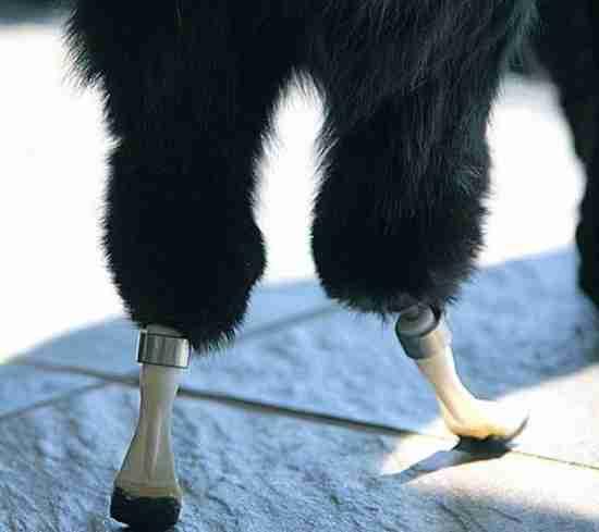 Ο Όσκαρ με τα βιονικά πόδια