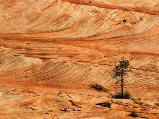 Το μαγευτικό Zion National Park