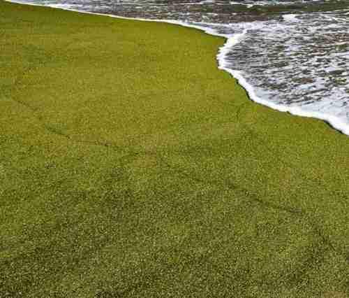 Η πράσινη παραλία