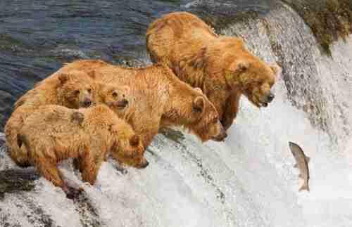 25 απίστευτα τυχερές φωτογραφίες ζώων