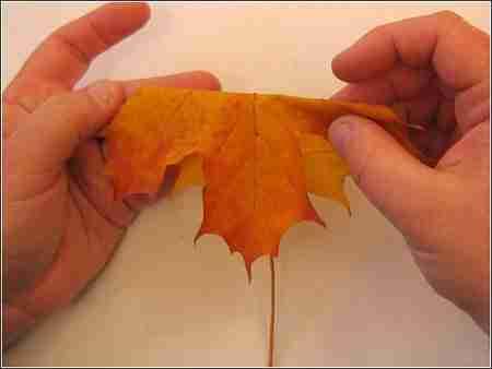 Πως θα φτιάξετε τριαντάφυλλα από φύλλα δέντρων
