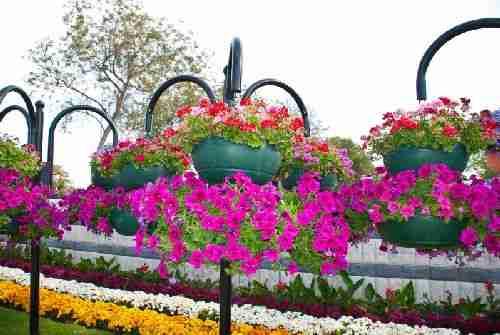 Ο παράδεισος των λουλουδιών