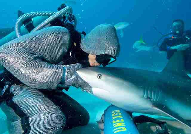 Χορεύοντας με τους καρχαρίες