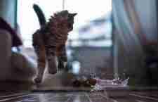 Φωτογραφίζοντας γάτες την πιο.. κατάλληλη στιγμή!