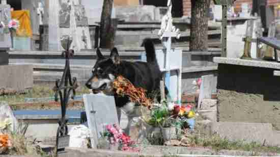 Ο σκύλος που κοιμάται εδώ και 6 χρόνια στον τάφο του ιδιοκτήτη του